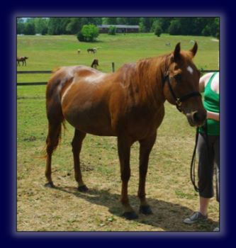 Registered Quarter Mare Free!