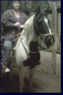 Spotted Saddle Mare For Sale