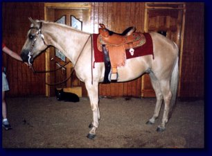 Palomino American Quarter Horse For Sale