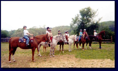 This horse is first on left in photo