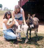 Half Ass Acres Miniature Donkey Farm Visit (6478 bytes)