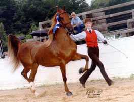 Saddlebred (8418 bytes)