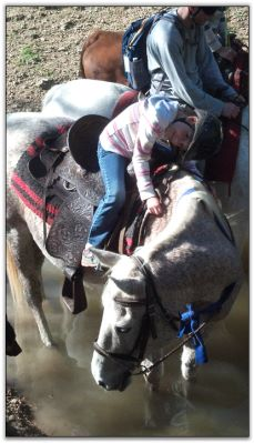 Trail Riders at Peavine Creek Farm and Stables